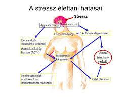 """Képtalálat a következőre: """"stressz"""""""
