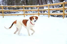 Dog Breeds Height Chart Best Dog 2018