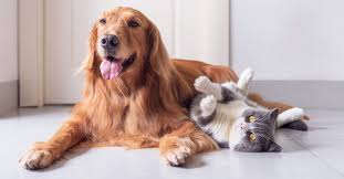 A separate plan that offers additional benefits is called secondary insurance. Do Older Pets Need Health Insurance Pumpkin