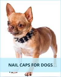 Softclaws Com Nail Caps For Cats And Dogs