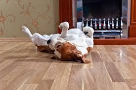 best flooring options for dogs cats