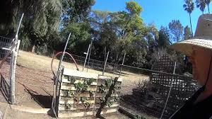 vertical gardening strawberries in a palette fruit in 3 months