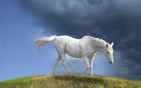 Hd Horse New Beautiful Wallpapers Desktop 282607 Hd