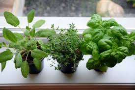fertilize an indoor herb garden