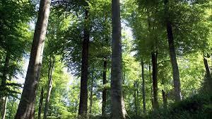 Pyrénées : les opposants au projet de scierie industrielle à Lannemezan  dénoncent une menace sur la ressource forestière