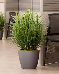 Tall Decorative Grass Tall Decorative Grasses Decor