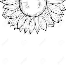 美しいモノクロのひまわりの花の境界線と黒と白