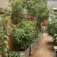 container garden vegetables.  Container Growing Veg In Metal Garden Containers In Container Garden Vegetables S