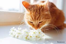 7 causes of cat sneezing