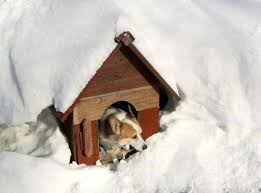 outside dog house heater cold weather dog house dog house heater pad petsmart outside dog house