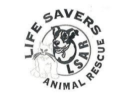 lsar lsar southshore veterinary service on itemized bid worksheet