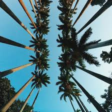 palm trees tumblr. Tumblr - Image #3842747 By Helena888 On Favim.com Palm Trees