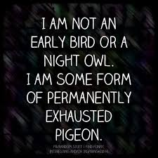 Quote Of The Day Funny Magnificent Exhausted Pigeon Lol Humor Me Pinterest Exhausted Humor And