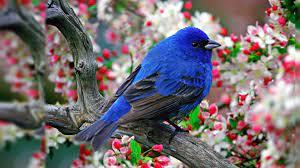 Birds PC Wallpapers - Top Free Birds PC ...