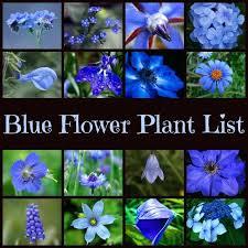 garden flower names names of blue flowers list miracle garden flower names garden flower names