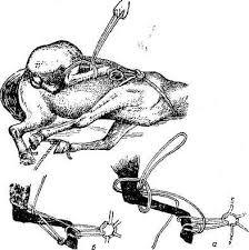 ФИКСАЦИЯ ЖИВОТНЫХ глава из книги ОПЕРАТИВНАЯ ХИРУРГИЯ ДОМАШНИХ  Р и с 23