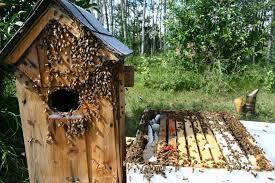 house plans 110 best ducks of wood duck post