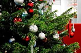 Office Christmas Trees Real Or Fake Whats Best For The