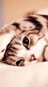 Cat Cute Mobile Wallpapers - Wallpaper Cave