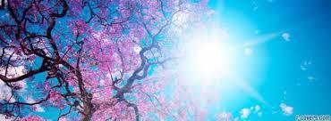 banner for facebook blooming spring facebook cover timeline