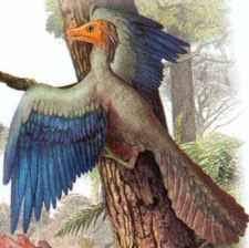 Динозавр птица Архиоптерикс Реферат ДОКЛАД ПО ПРИРОДОВЕДЕНИЮ