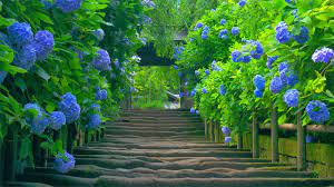 Beautiful Scenery Wallpaper Hd Download ...