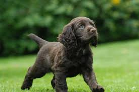 in the first of this five part series chion trainer ben randall offers advice on choosing a gundog puppy