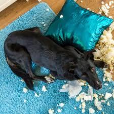 """Sie wird auch die """"kleine schwester der hundekrankenversicherung genannt. Leistungen Der Hundehaftpflicht Auf Einen Blick"""