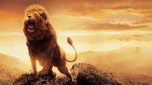 Lion HD Wallpaper for PC Mobile ...
