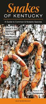 Snake Identification Chart Snakes Of Kentucky A Guide To Common And Notable Species
