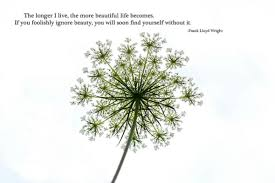 Find The Beauty In Life Quotes Best Of The Longer I Live The More Beautiful Life Becomes If You Foolishly