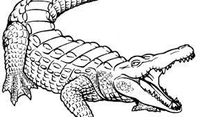 Small Picture Crocodile Coloring Pages