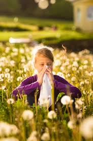 5 Best Homeopathic Medicines for Hay Fever