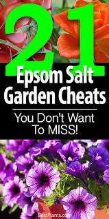 epsom salts for gardening.  Gardening Area In 2 Tbsp Of Epsom Salt A Cup Water This Will Increase The  Osmotic Pressure Skin And Help Draw Splinter Out On Its Own Accord In Epsom Salts For Gardening E