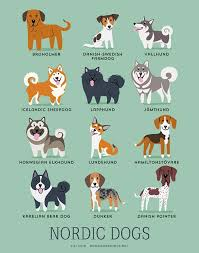 Small Picture These Illustrations Show The Origins Of Dog Breeds In The Cutest