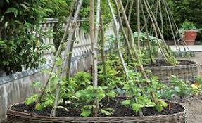 Small Picture Vegetable Garden Design Ideas Garden Design