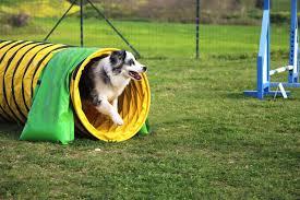 dog agility equipment diy create your own agility course on a budget