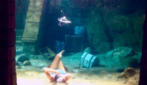 real underwater world. Contemporary World Original Underwater Tricks Bubble Ring Circles Take New Shapes By Free  Diver Mermaid Melissa At Sea World In Real Underwater N