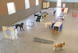 Welcome to grateful dog sacramento dog daycare, dog boarding, dog walking, and dog grooming all in one great location at grateful dog! Stone Mountain Pet Products Commercial K9 Boarding Equipment