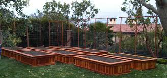 raisedable garden beds masters recommended wood for boxes home outdoor decoration building in seattle post idolza