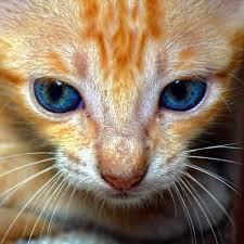 file indian cat pic jpg