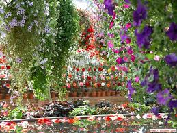 Small Picture Photos Of Beautiful Garden Most Flower Free Hd Wallpapers Four
