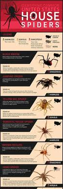 how to kill spiders in house. How To Identify Common Poisonous Spiders In Your Home Kill House
