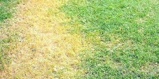 Dollar Spot Treatment Disease Lawn Fungus Insideoutcircus Co