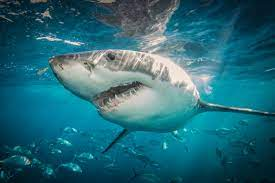 When Is Shark Week 2021? Everything You ...