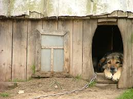 dog doors absent a safe fence system is dangerous