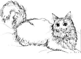 Small Picture Free Printable Cat Coloring Pages Page 1 Cat Templates to