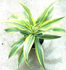 identifying popular house plants nz common indoor vine how to identify and care for houseplants a z