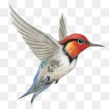 Bird Beak Chart Bird Beak Png Bird Beak Logo Bird Beak Vector Types Of