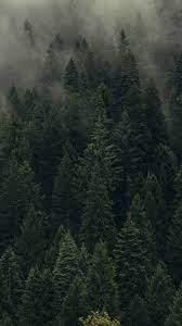 Forest wallpaper, Dark green aesthetic